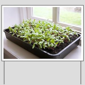 Seedlings of Perpetual Spinach - Yard Sign