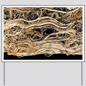 Roots of a pot-bound Buddleja plant - Yard Sign