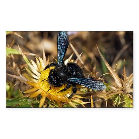 Violet Carpenter Bee - Sticker (Rectangle)