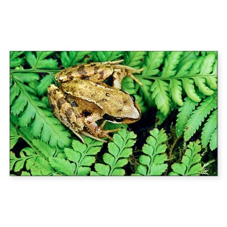 Juvenile common frog sticker rectangle by sciencephotos for Stickers juveniles
