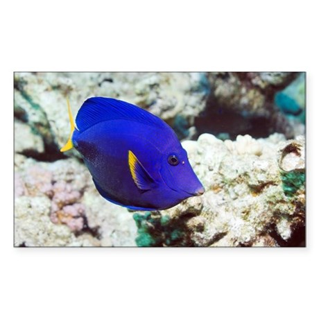 Powder-blue tang - Sticker (Rectangle) by sciencephotos