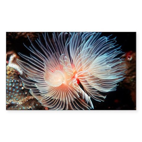 Feather Duster Worm Baby Feather duster ...