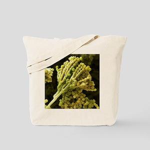 Mould fungus, SEM - Tote Bag