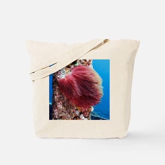 Algae - Tote Bag