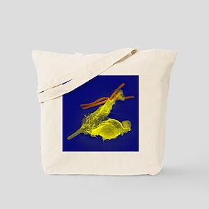 Neutrophils and anthrax bacteria, SEM - Tote Bag
