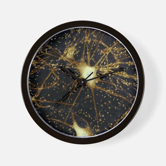 Motor neurons, light micrograph - Wall Clock