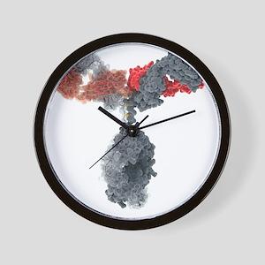 Immunoglobulin G antibody molecule - Wall Clock