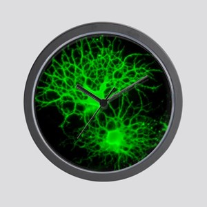 Oligodendrocyte nerve cells - Wall Clock