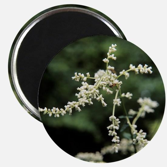 Artemisia flowers - Magnet