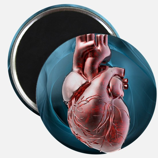 Human heart, artwork - Magnet