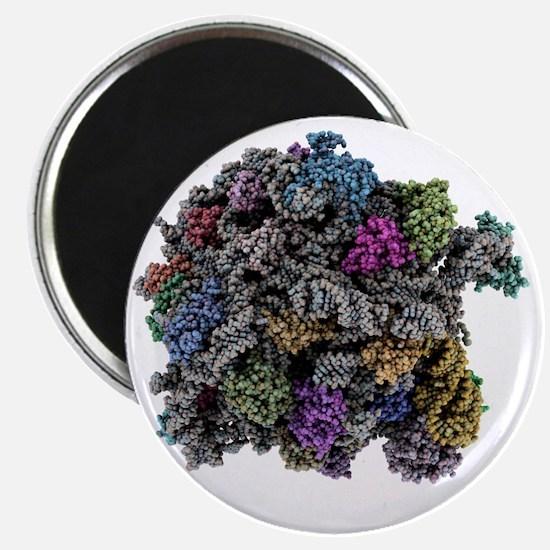 Ribosomal subunit, molecular model - Magnet
