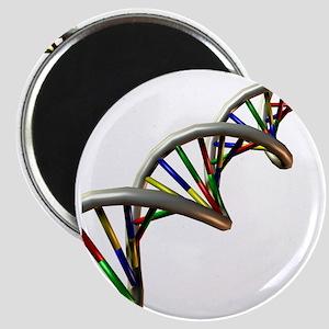 DNA molecule - Magnet
