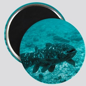 Coelacanth fish - Magnet