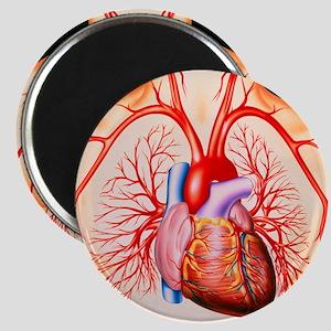 Human heart, artwork - Magnet