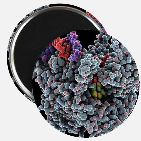 RNA polymerase transcription, artwork - 2.25