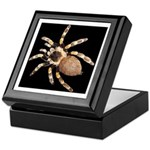Spiffy Spider Grown up's Treat Box for Halloween