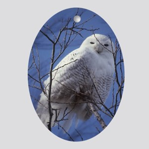 Snowy White Owl Ornament (Oval)
