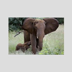 African elephants - Rectangle Magnet