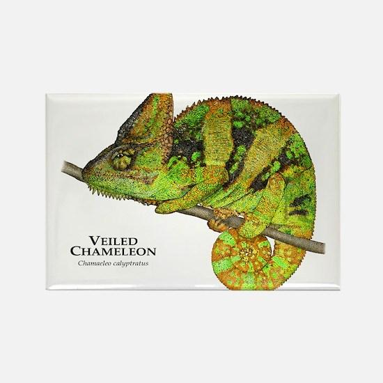 Veiled Chameleon Rectangle Magnet