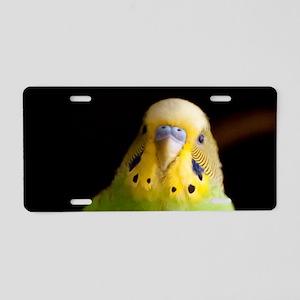 Green Parakeet Aluminum License Plate