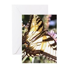 Swallowtail Butterfly Greeting Cards