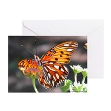 Gulf Fritillary Butterfly Greeting Cards