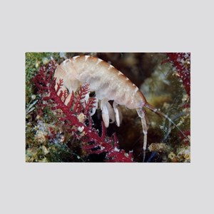 Amphipod crustacean - Rectangle Magnet