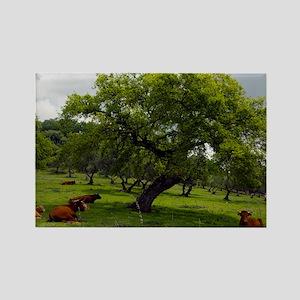 Cattle under a holm oak tree - Rectangle Magnet