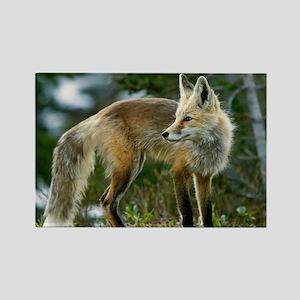 Cascade red fox - Rectangle Magnet