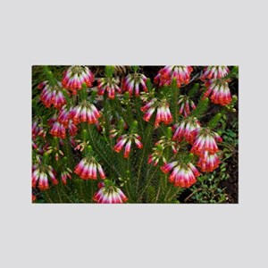 Elim heath (Erica regia) - Rectangle Magnet