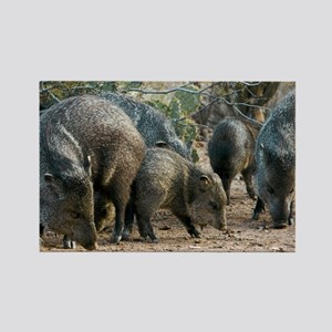 Family of Collared Peccaries - Rectangle Magnet
