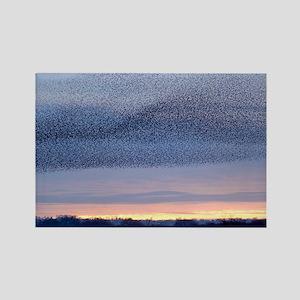 European starling flock - Rectangle Magnet