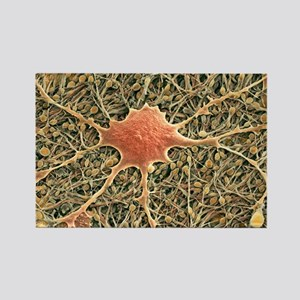 Glial cells, SEM - Rectangle Magnet