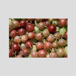 Harvested gooseberries - Rectangle Magnet