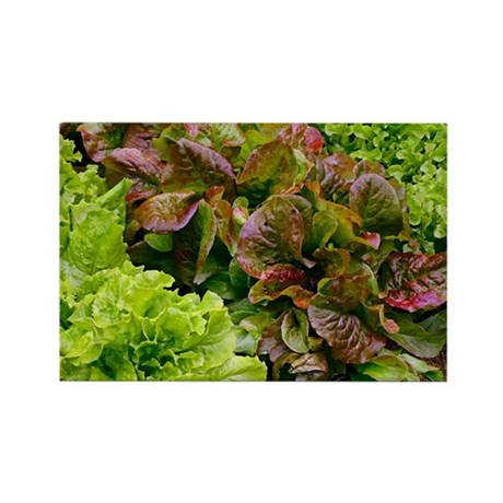 Lettuce - Rectangle Magnet