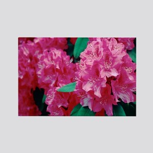 Rhododendron 'Cynthia' - Rectangle Magnet