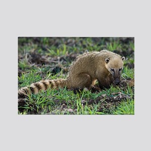 South American coati foraging - Rectangle Magnet