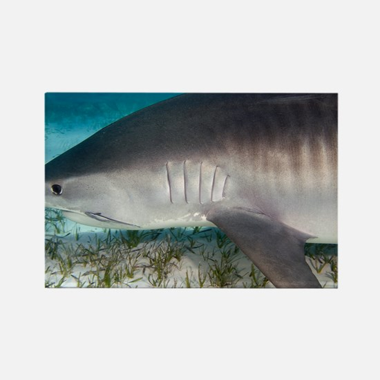 Tiger shark - Rectangle Magnet