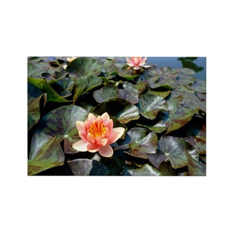 Water lily (Nymphaea sp.) - Rectangle Magnet