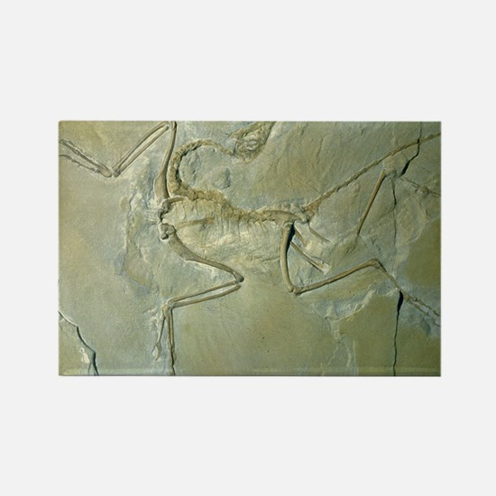 Archaeopteryx fossil - Rectangle Magnet