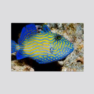 Blue triggerfish - Rectangle Magnet