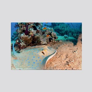 Blue-spotted stingray - Rectangle Magnet