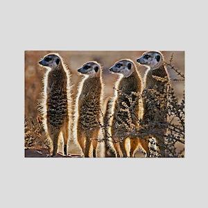 Meerkats - Rectangle Magnet