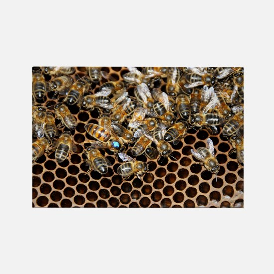 Queen bee with worker bees - Rectangle Magnet