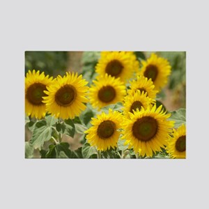 Sunflowers - Rectangle Magnet
