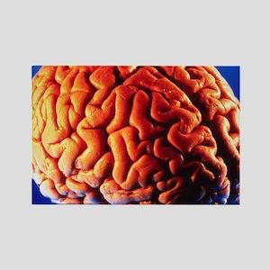 Human brain - Rectangle Magnet