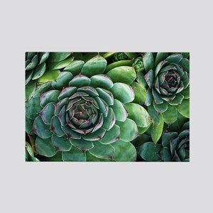 'Hens and chicks' succulents - Rectangle Magnet