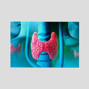 Thyroid gland - Rectangle Magnet