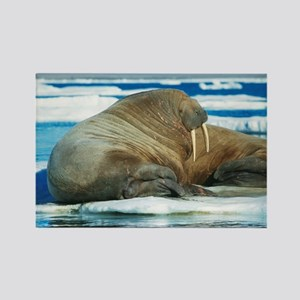 Atlantic walrus - Rectangle Magnet