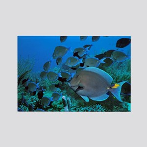 Blue tang surgeonfish - Rectangle Magnet